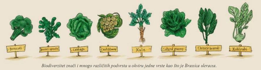 Међународни дан биодиверзитета